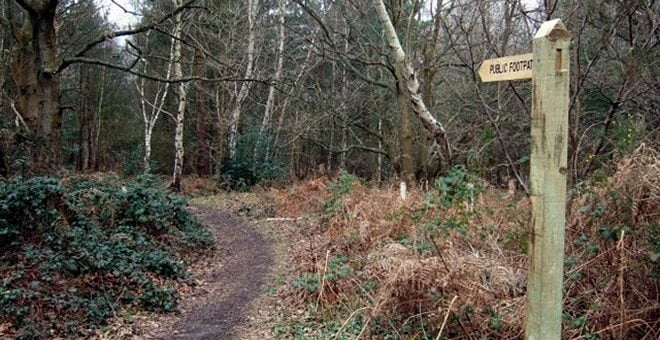 Footpath at Pyrford Common